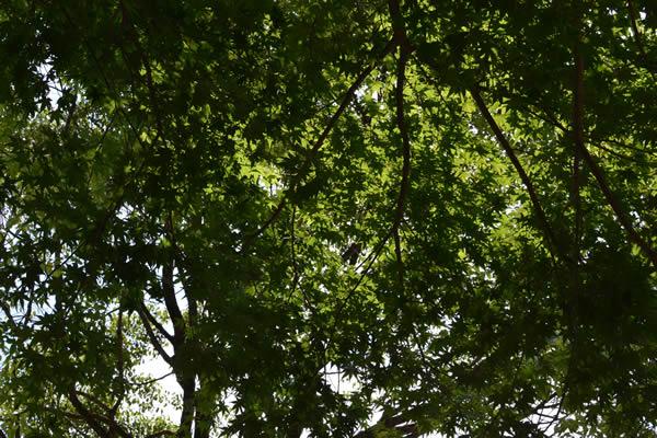 キャンプ 新緑