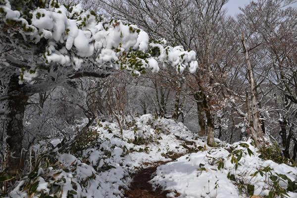 高知 登山 寒風山