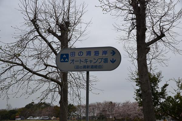 196 キャンプ 高知 香川 大池 花見 グルキャン