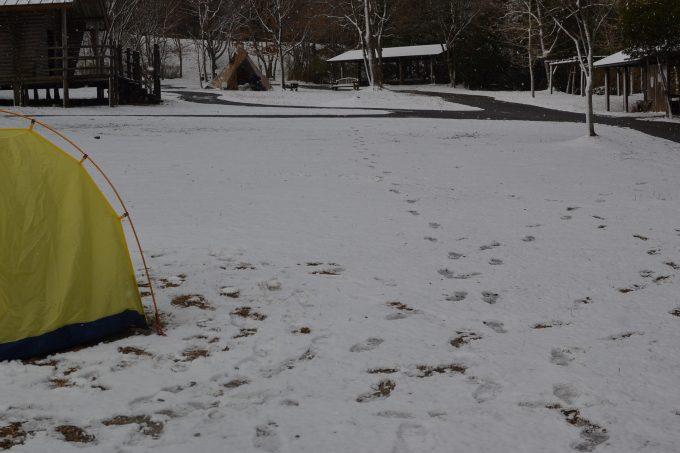 冬キャンプ 忘年会キャンプ 雪中キャンプ 四国キャンプ 高知キャンプ