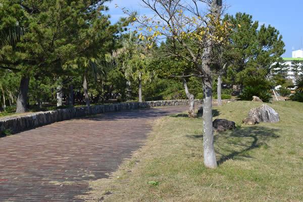 高知市 キャンプ場 種崎千松公園