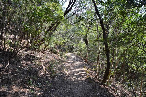 高知 高知市 登山 鷲尾山 ハイキング トレッキング