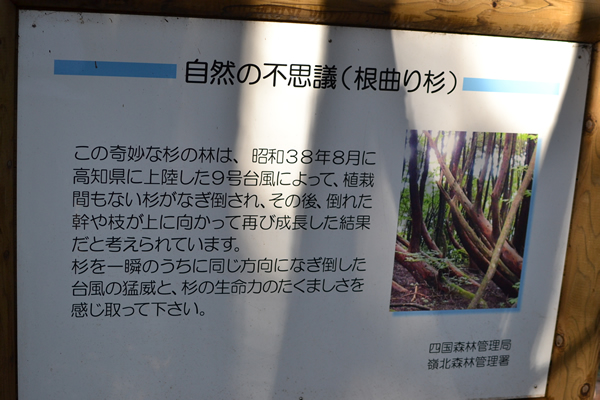 高知 登山 アウトドア 工石山