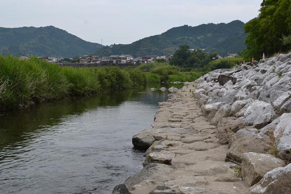 高知 キャンプ場 宮の前 公園 コスモス コスモス祭り 越知町 無料