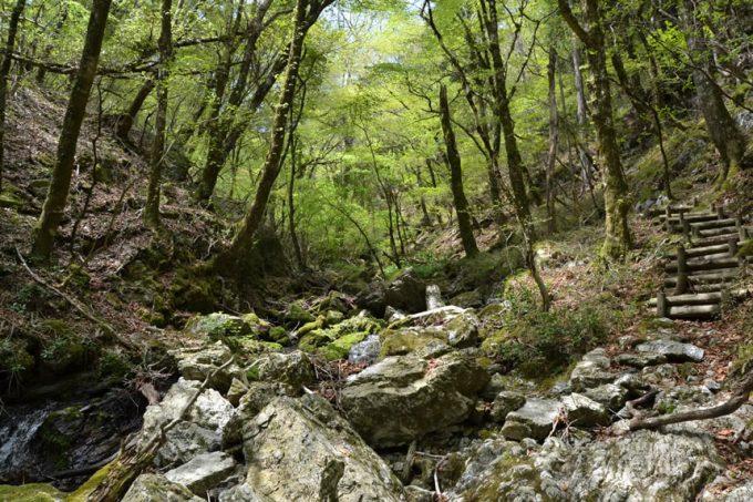 高知 登山 梶が森 梶ヶ森 竜王の滝 ツナガール マグロ 解体